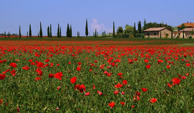 Tuscany by Massimo Valiani